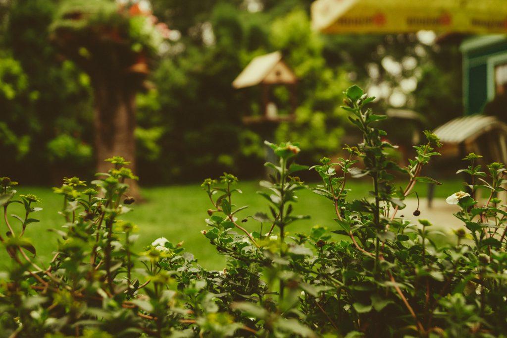 green garden bkd